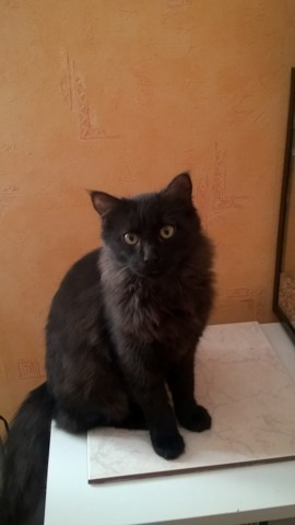 Salem, chat