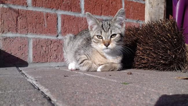 Sanka, chaton