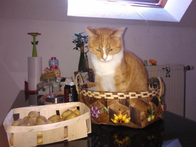 Moulinette, chat