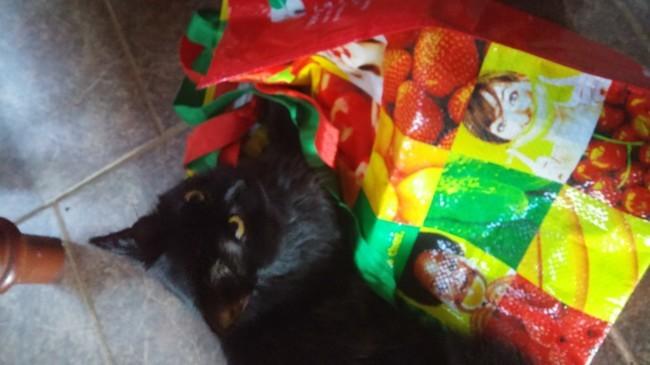 Bandit, chaton