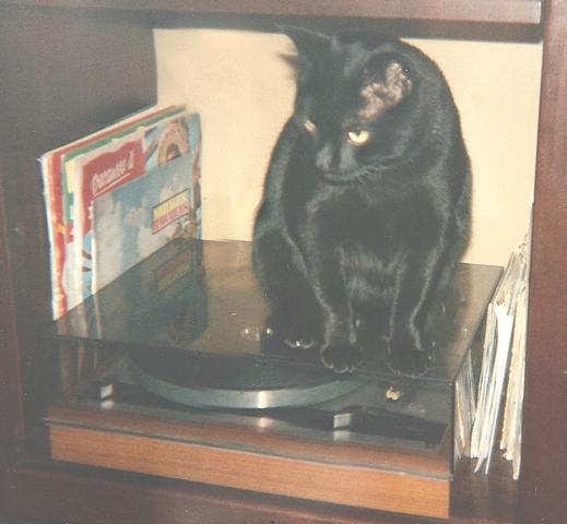 Mitsou Dit Mimi - Décédé, chat