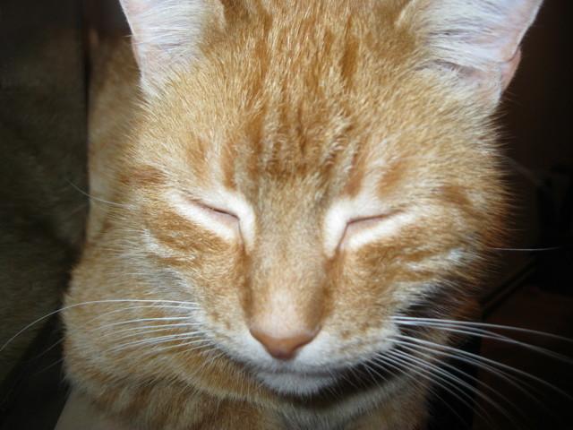 Boubou, chat