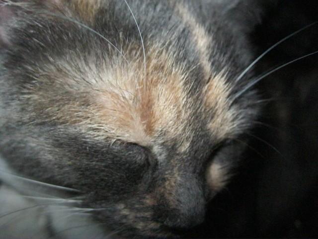 Mémère, chat