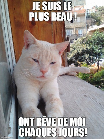 Beal Fire Et Blancio Fire, chat
