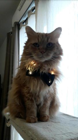 Montigrou, chat