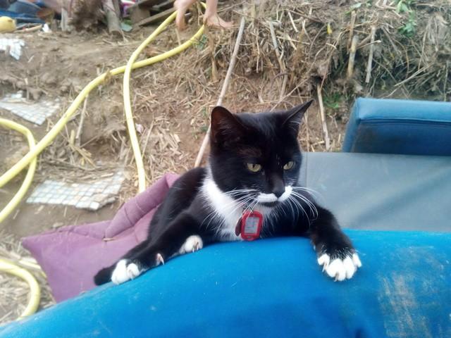 Lidia, chaton