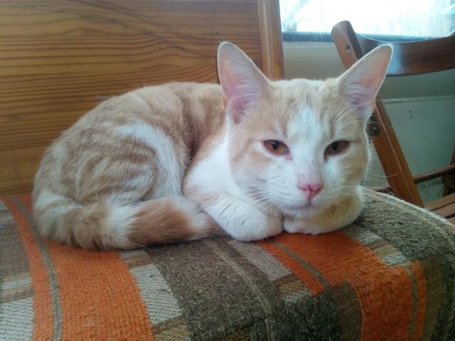 Walter, chaton