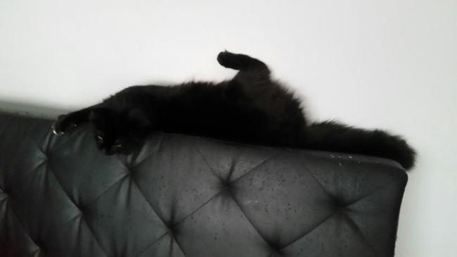 Azazel, chaton
