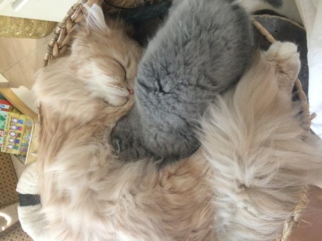 Lolita, chaton