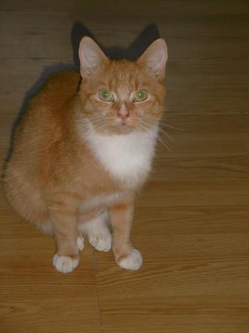 Merlin Et Gus, chaton