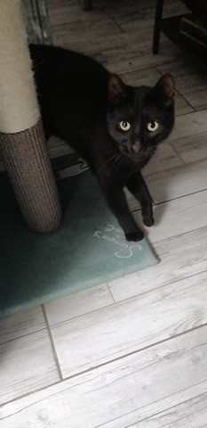Nino Et Stitch, chat