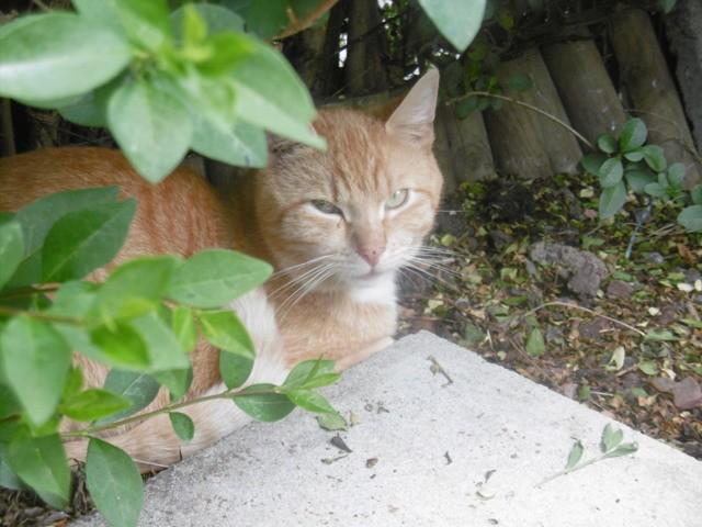 Merlin Et Gus, chat