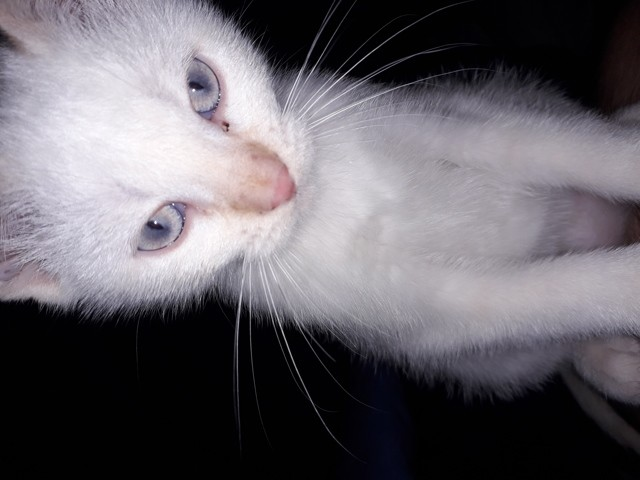 Toshi, chat