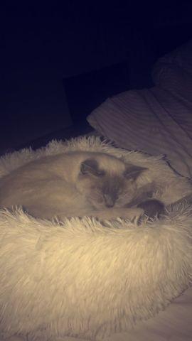 Luna, chaton