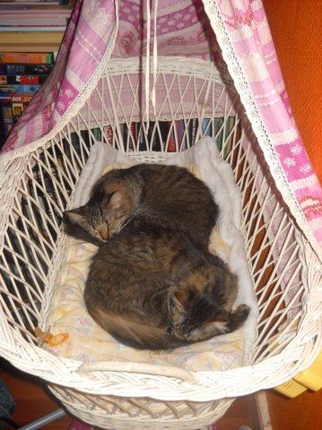 Check Et Lilou, chat