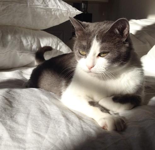 Chic, chat Gouttière