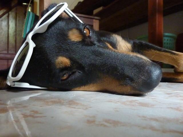 Vanille, chien