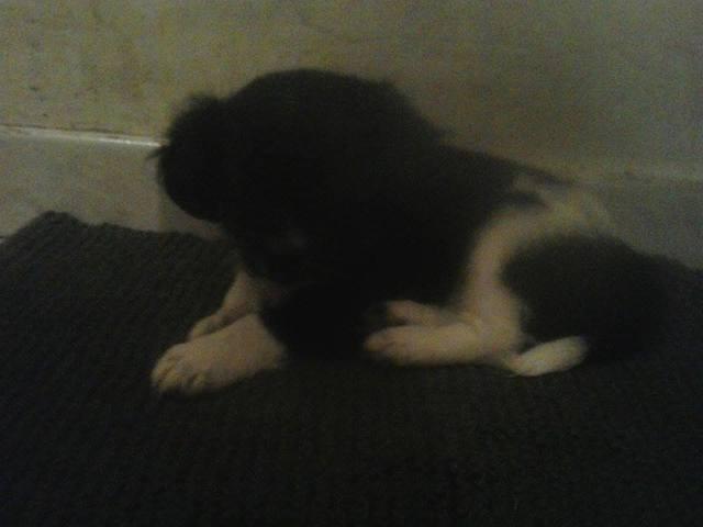 Nina, chiot
