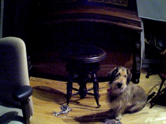 Mozart, chien