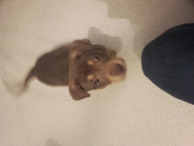 Lizzy, chien