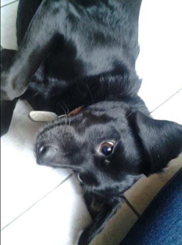 Elfie, chien
