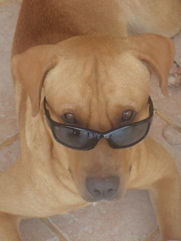 Zion, chien