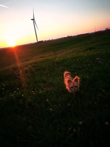 Iouka, chien