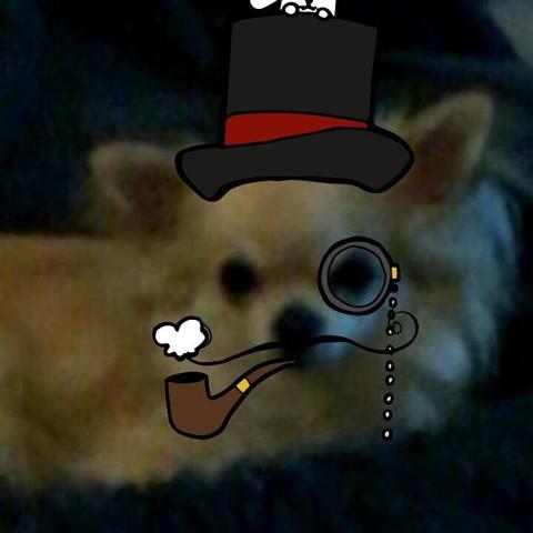 Jaya, chien