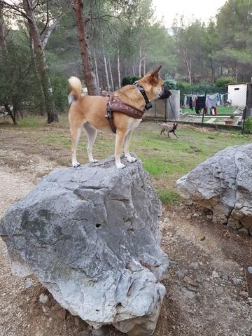 Wolfie, chien