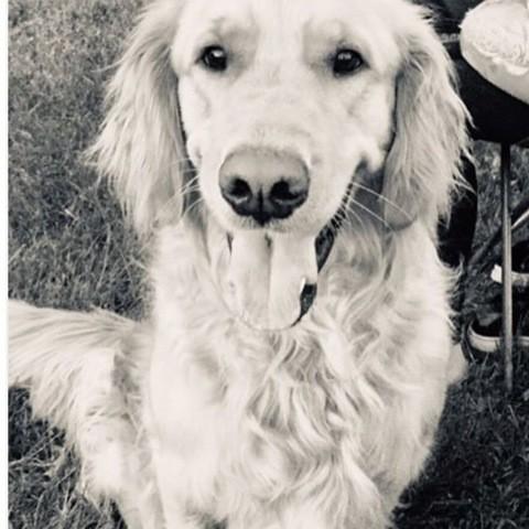 Leo, chien