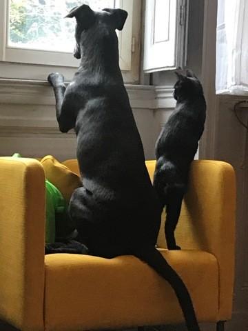 Taz Et Chat, chien