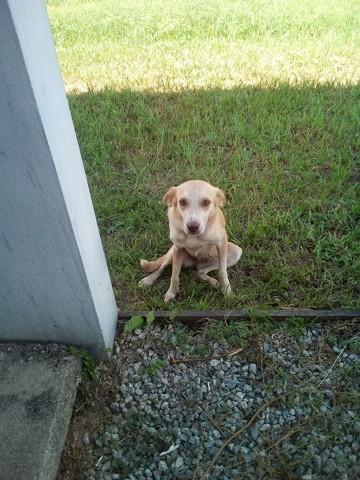 Mina, chien