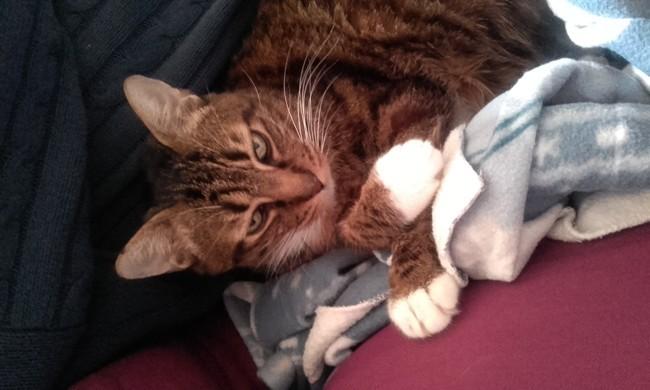 Chippendel, chat Gouttière