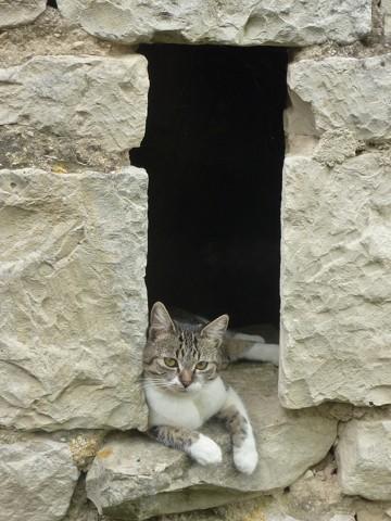 Chucky, chat Gouttière