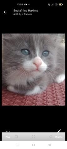 Cris, chaton