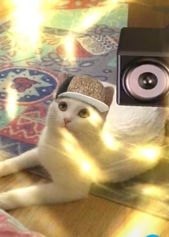 Dali, chaton