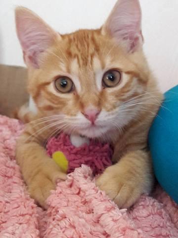 Daryl, chaton Gouttière
