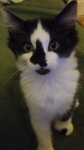 Diablo Actuellement Disparu, chat Gouttière