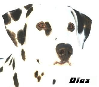 Diaz, chien Dalmatien