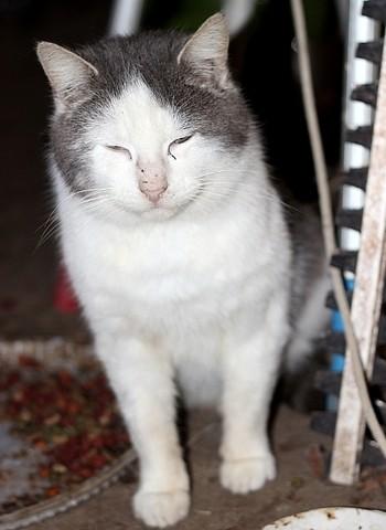 Dior, chat Gouttière