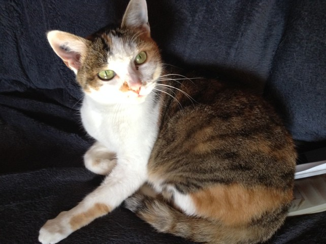 Djelly, chat Gouttière