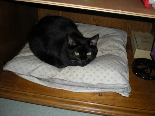 Donna, chat Gouttière