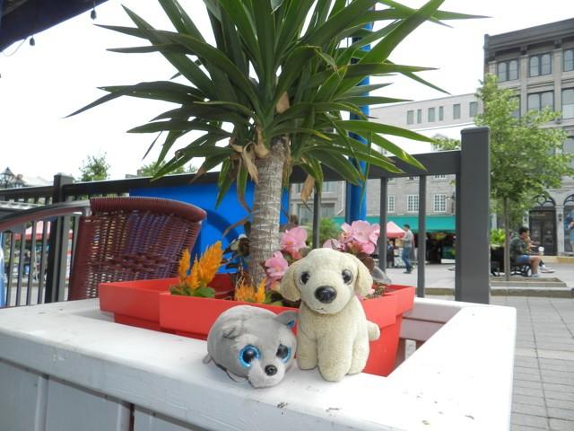 Doudou Globe-Trotter, chien Labrador Retriever