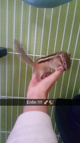 Alvin, rongeur Ecureuil