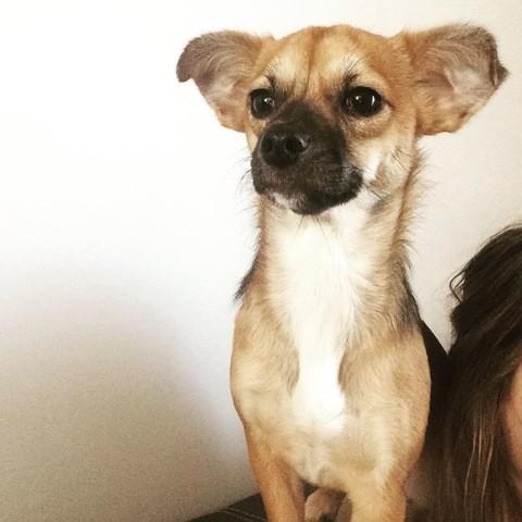 Emmy, chien