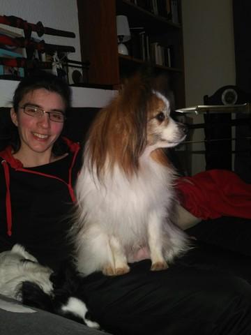 Diego, chien Épagneul nain continental