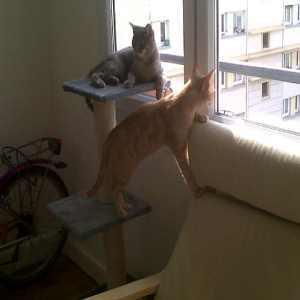 Lou, chat Gouttière