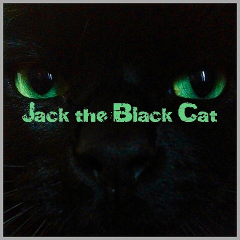 Jack The Black Cat, chat Européen