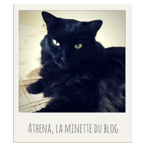 Athena, chat Européen