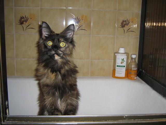 Ben quoi, vous n'aimez les baignoires vous ??